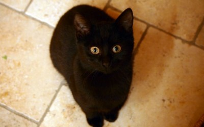 Katze schaut in die Kamera