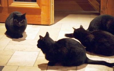 4 Katzen