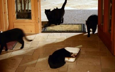 5 Katzen mit Napf